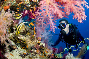 diver-near-coral-reef-egypt