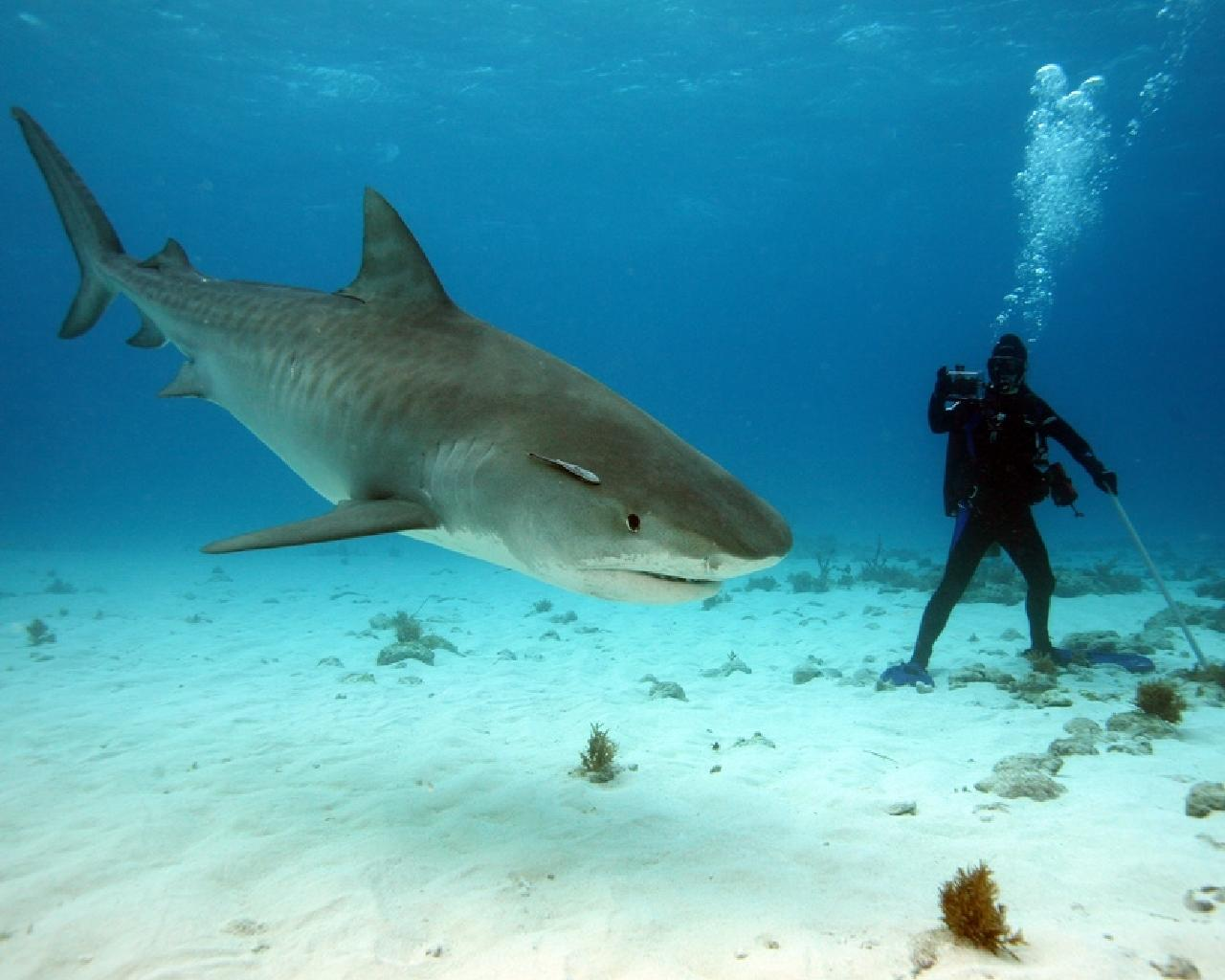 shark-022