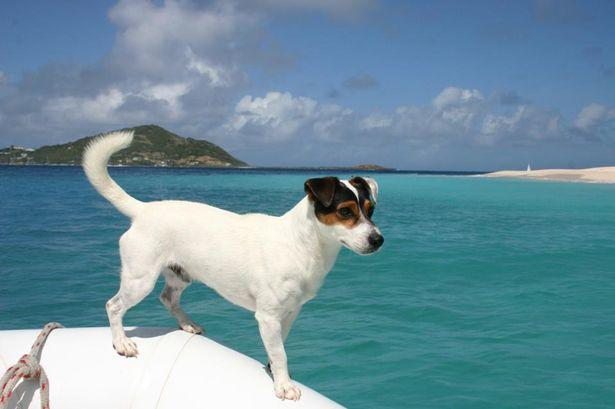 dog_2_skipper