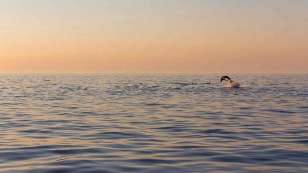 M8O65p4Tz2ru9tWq18vC_Croatia-experiences-dolphin-SS-Roman-Tsubin-1280x720