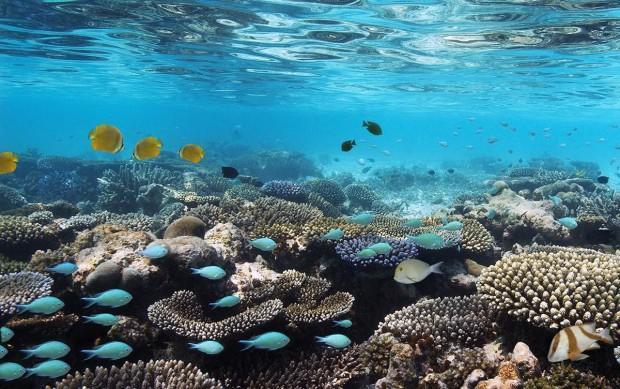 Коралловый_риф_в_лагуне_Мальдив