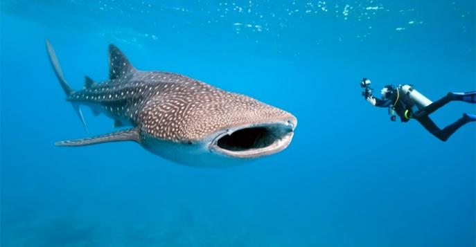 daiving-i-snorkeling-na-filippinah-chasti-1-13370881338865_w687h357