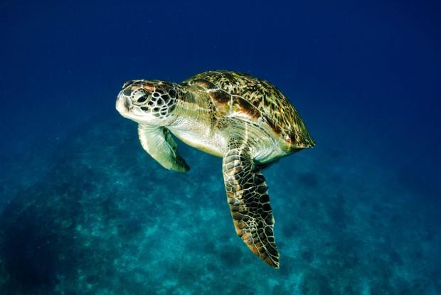 diving-phuket-1