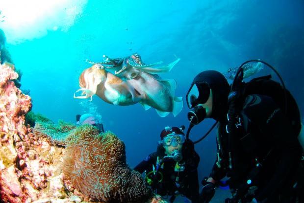 divingkuba3