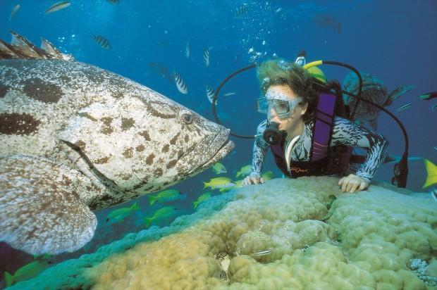 012805Great Barrier ReefUnderwater Diving