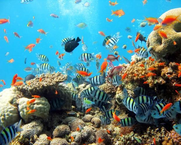 Krasnoe-more-korallovy`j-rif-E`jlat2
