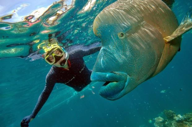 Me_with_Humphead_Wrasse_Great_Barrier_Reef