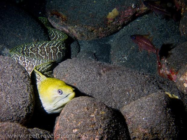 Moray3-Night-dive-S