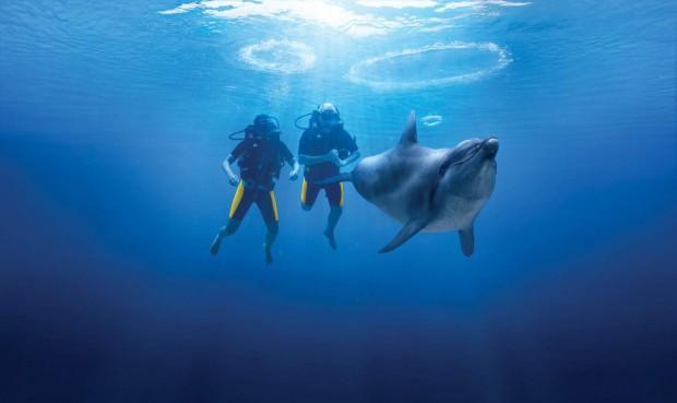 dolphinscubadive-hero-main