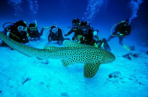thai-divers