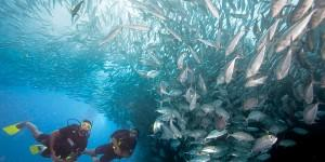 Divers with fish school; snorkel added to one diver