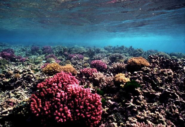 (c) Wolcott Henry 2005 Marine Photobank coral