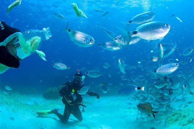 На Комино каждый день – рыбный. Фото: Павел Дивин