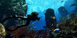 Nature___Sea_Underwater_hunting_041636_