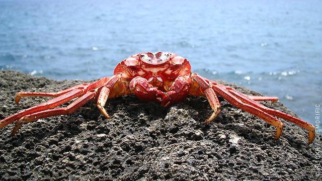 66948_1_crab